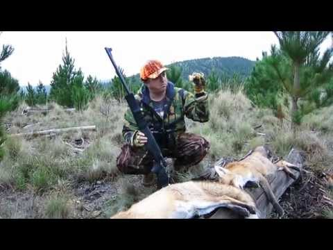 Aussie Shooter State Forest  Fox Hunting