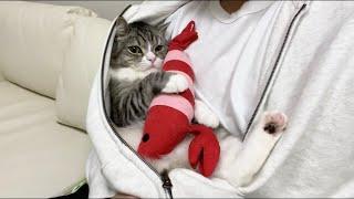 パーカーの中から出てくれない甘えんぼ猫がまじかわいすぎた…笑