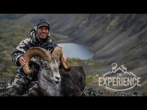 The Quest For 4 - STONE SHEEP -4K VIDEO