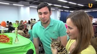 Глазами животных. Выпуск 202. Выставка кошек (часть 2).