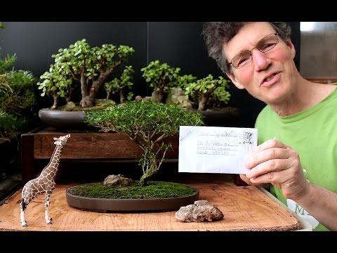 Starting an Acacia Bonsai from Seed, April 2016