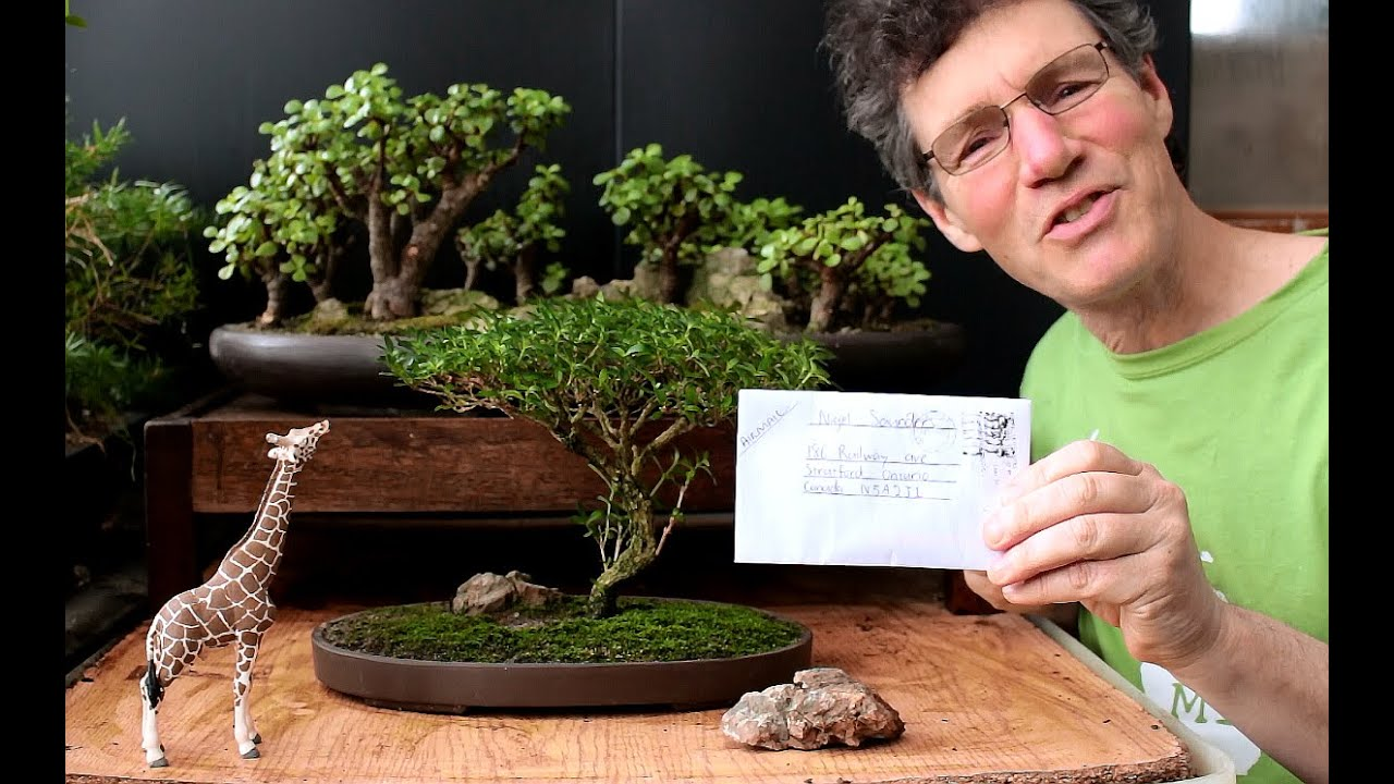 Starting An Acacia Bonsai From Seed April 2016 Youtube