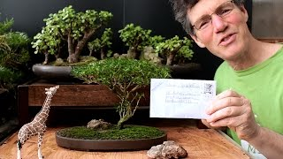 Starting an Acacia Bonsai from Seed, April 2016