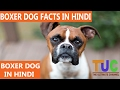 Boxer Dog Facts In Hindi | Dog Facts | Popular Dogs | The Ultimate Channel