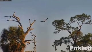 swfl-eagles-e9-returns-to-the-nest-welcome-home-celebratory-fish-dinner-3-15-17