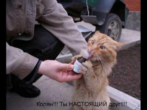 Картинки по запросу самые смешные картинки про котов