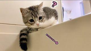 お湯貼りを観察してたらスベってドボンしかけたもち猫…汗