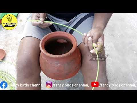 extra-pots-adding-my-budgies-(love-birds)-colony-breeding-farming-|-தமிழில்-|-#fancybirdschennai