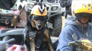 ATV Riding Dog! Helmet, goggles, and Leather Dog! Cool