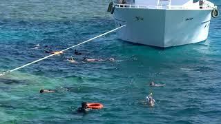 Snorkeling Sharm el Sheikh Red Sea Coral Reefs Egypt Шарм эль Шейх Кораллы Красного моря Египет