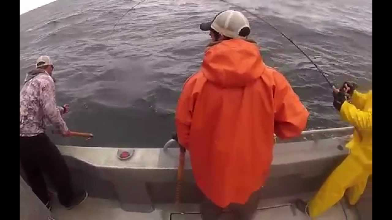 Alaska fishing trip 2014 youtube for Alaska out of state fishing license