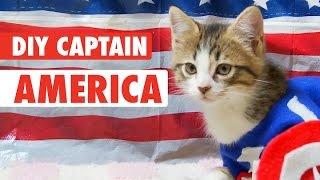 DIY How To Kitten Costume: Captain America