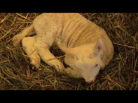 New Springtime Life On The Farm - Baby Animals