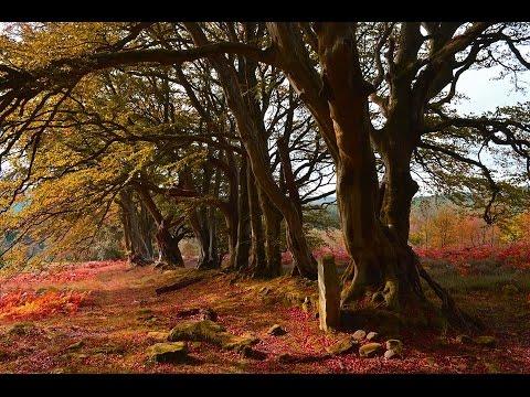 Hidden Northumberland.