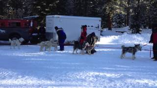 Siskiyou County sled dog races