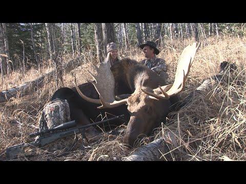 Moose Hunting in the Foothills of Alberta