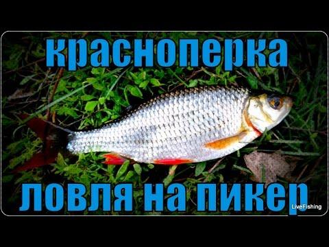 видео пикерная рыбалка