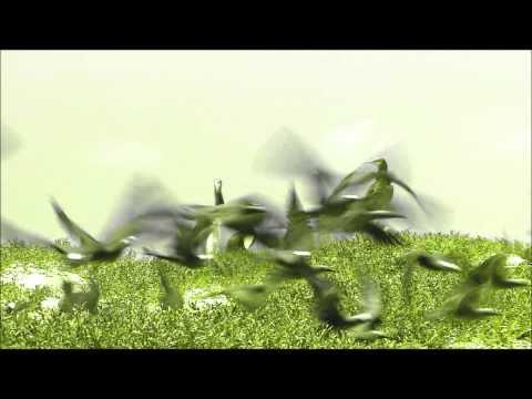 Paul Simon - Graceland (Nature Music Video)