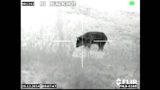 WILD HOG HUNTING KILL SHOTS