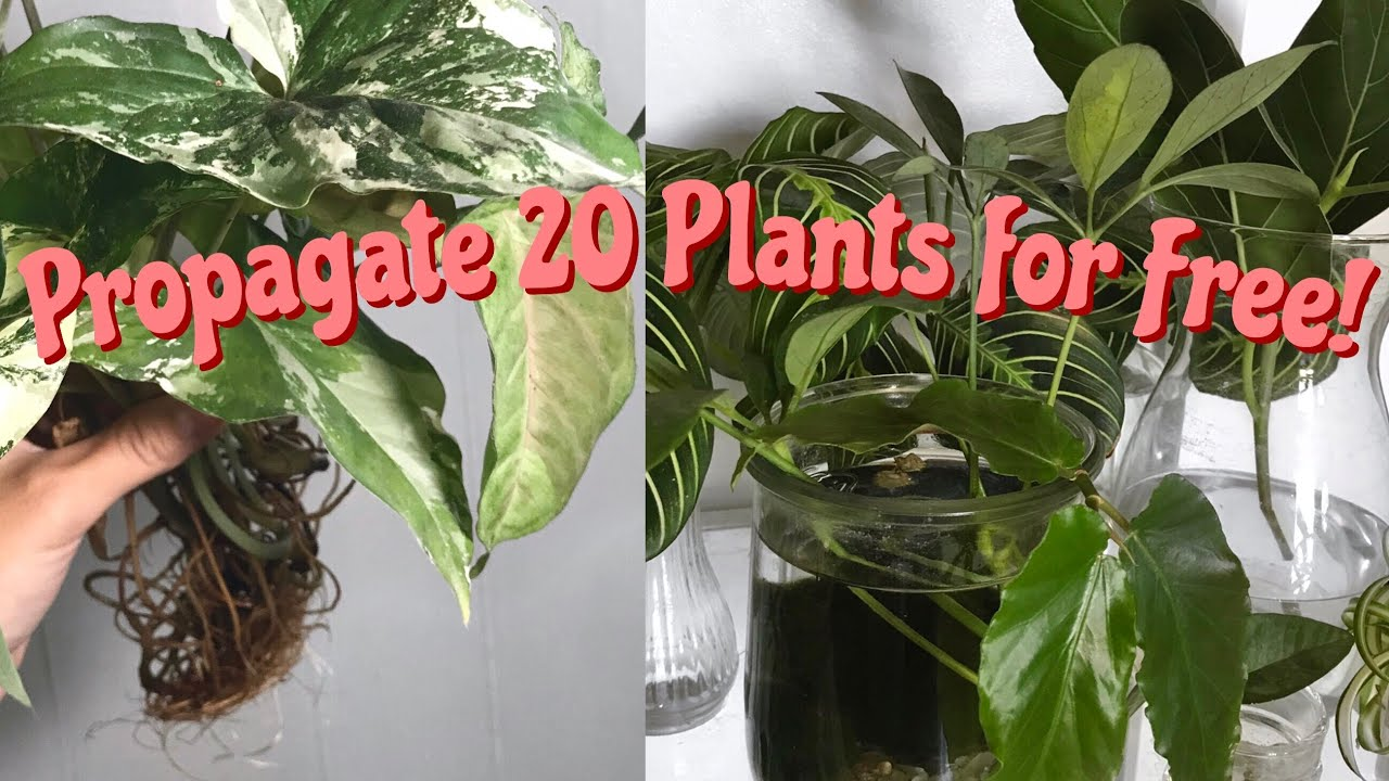 20 Easy Houseplants To Propagate 20 Easy Indoor Plants You Can Grow For Free Youtube
