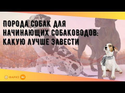 Вопрос: Какие основные критерии для выбора породы собаки?