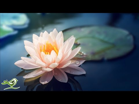 Relaxing Piano Music: Soft Sleep Music, Water Sounds, Spa Music, Yoga Music ★107