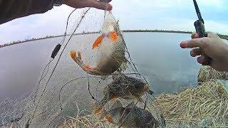 Браконьеры не дали половить рыбу Рыбалка в Волго Ахтубинской пойме