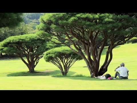 Shinjuku Gyoen National Garden  新宿御苑