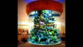 видео Цилиндрические аквариумы
