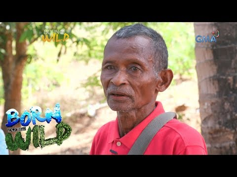 Born to be Wild: Doc Nielsen looks for an endemic wild plant with the Dumagat tribe
