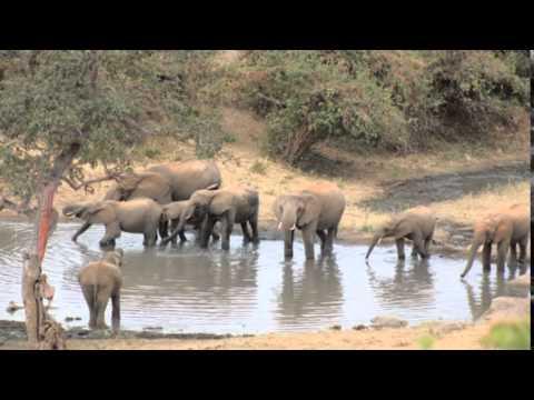 26   Tsavo West National Park   Day 01