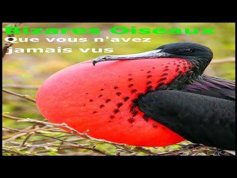 20 oiseaux les plus étranges du monde que vous n'avez jamais vus
