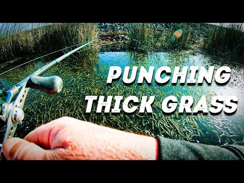 Punching for Bass in Thick Grass Mats