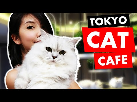 Cat Cafe In Tokyo: 5 Tips
