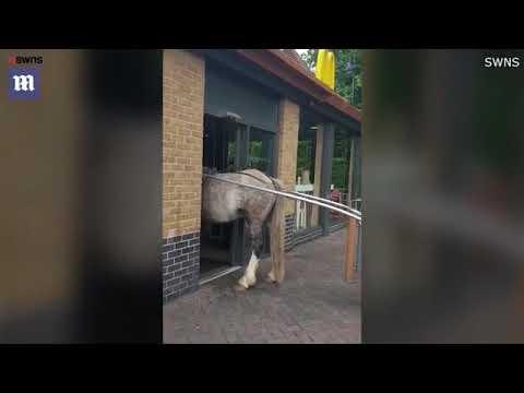 """Лошадь пытается зайти в """"Макдоналдс"""""""