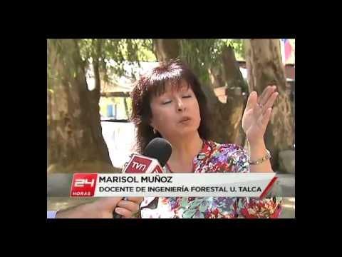 Marisol Muñoz:: Arbolado Balneario Río Claro