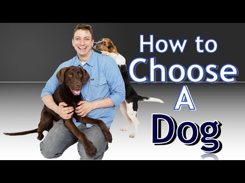 Training 4 Different Dogs: How to choose the BEST Dog for You!