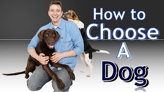 Training 4 Different Dogs How to choose the BEST Dog for You