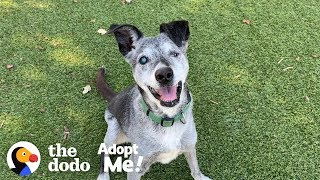 Watch This 19 Year Old Puppy Pick His Very Own Toy At The Pet Store | The Dodo Adopt Me!