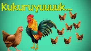 KUKURUYUK (Lagu anak Indonesia)