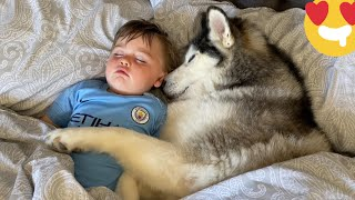 Husky Steals Babies Bed But Helps Him Get To Sleep! [CUTEST VIDEO EVER!!]