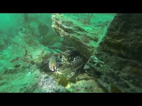 SCUBA Diving: Kinsale, Co. Cork, Ireland