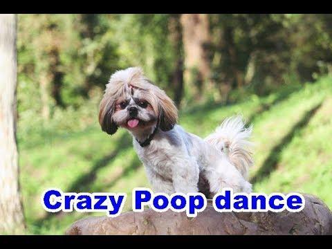 Puppyhood Crazy Poop Dance VideoOfTheDay YouTube - 26 dogs puppyhood photos