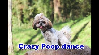 Puppyhood - #Puppy #Poop #Dance  - #VideoOfTheDay