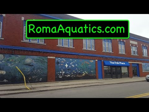 The Fish Place Tour - RomaAquatics.com
