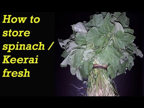 How to store Keerai Fresh in tamil   Best way to keep Spinach   Kitchen tips in tamil
