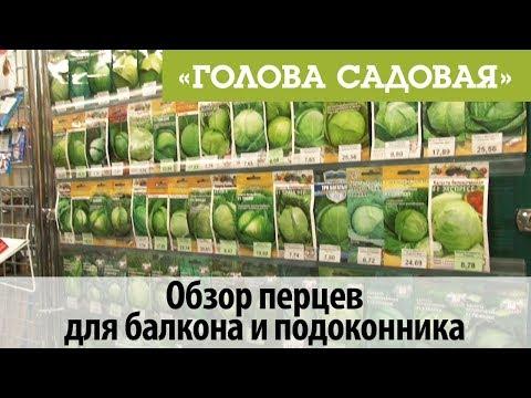 Голова садовая - Полный обзор семян капусты   садоводство   кулинария   заготовки   участок   садовая   рецепты   покупки   готовим   просто   огород