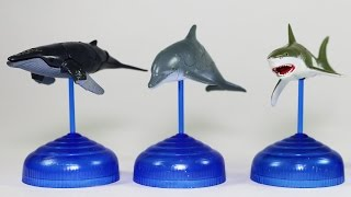 SEA ANIMALS 3D PUZZLES - Humpback Whale, Great White Shark, Dolphin, Orca
