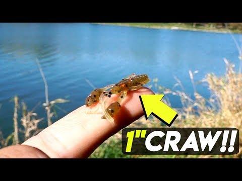 Micro Fishing w/ TINY Larva Baits CHALLENGE!!! (Surprise Catch)