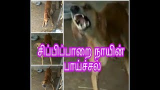 kanni dog food - Video Search Results